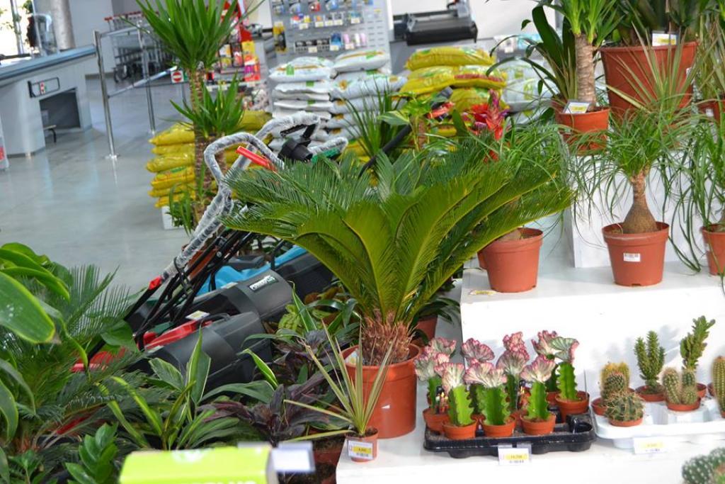 Bricola houmt souk djerba adresse horaire bonnes for Vente plantes artificielles tunisie